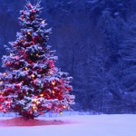 christmas-tree-hd-wallpapers-best-desktop-images-widescreen