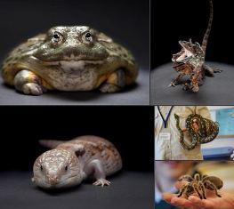 mr reptile