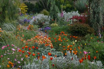 Gardening, Landscape and Horticulture